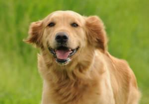 happydog-e1362071747579-300x210