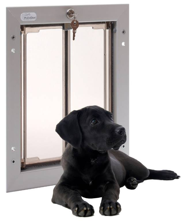doggie-and-door