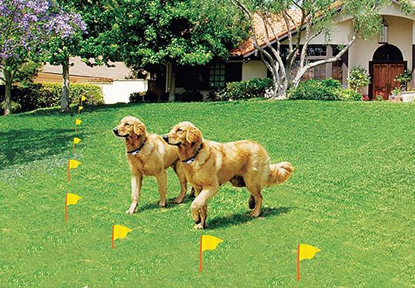ELECTRIC DOG FENCE INSTALLATION PRACTICES